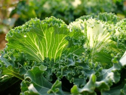 best-greens-for-juicing
